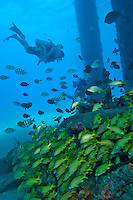 Various scenes beneath the Fredericksted pier, Fredericksted, St. Croix, USVI