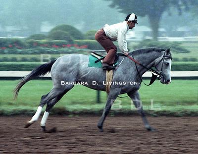 Jaklin Klugman, owned by Jack Klugman.  Jacinto Vasquez up, Saratoga 1980