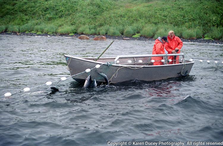 Olga Moser Bay, Kodiak setnetters, salmon, Alaska, Kourmetis family