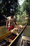 Asia, South East Asia, Borneo, Sarawak. Penan, nomadic hunter-gatherers with wild boar caught in their tropical rainforest. Dayak peoples of Borneo. 1991.'MEAT' across the World..foto © Nigel Dickinson