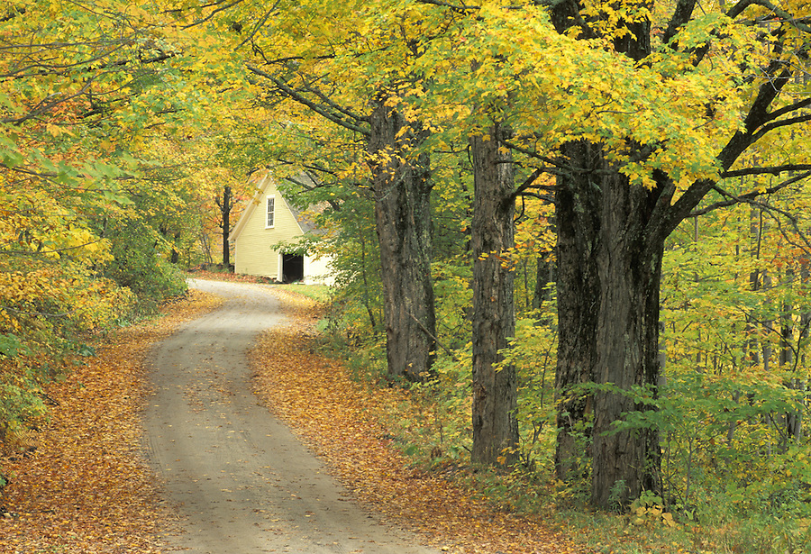 Yellow house at end of fall colored country lane, Peacham, Vermont