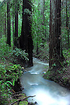 Sonoma County, CA.
