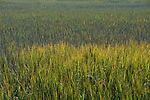 Marsh grass in South Carolina