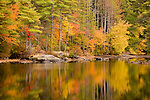 Full Autumn color in Harold Parker State Forest, Andover, MA