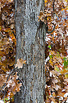 Fall colorful leaves and tree bark texture Autumn