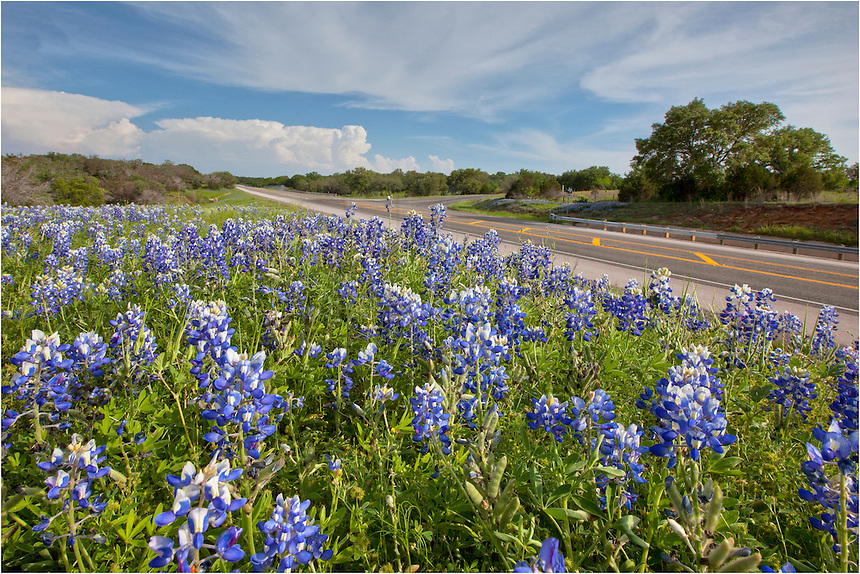 I was driving out to what would be one of my most memorable nights photographing wildflowers - heading to San Saba - when I decided to pull over and capture these bluebonnets as a storm cleared near Austin, Texas. Many of the bluebonnets had begun to go to seed, but the blue was still prevalent along the sides of this busy road between Llano and Marble Falls.