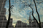 Trees are silhouetted by the reflection on the side of a glass building in New York, New York, United States of America.