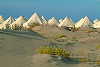 Rows of white tents on sandy dunes at Windsurfer Campsite, Red Sea, Egypt.