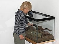 Kinder richten ein Aquarium ein, Schritt 4, Dekoratinonsmaterial wie Wurzeln und Steine werden eingebracht