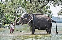 A mahout and his elphant bathing in an inland lake. (Photo by Matt Considine - Images of Asia Collection)
