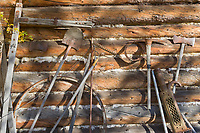 Vintage tools and equipment leaning against a log cabin wall of the Wiseman Trading Post. Wiseman, Alaska.