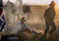 Cowboys stir up the dust while branding calves which is part of the spring ritual on ranches in Northern California.
