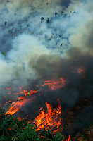 Aerial of rainforest being burned to clear land for cattle ranching, Brazil, Para, Amazon region.