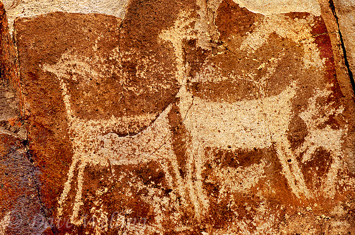 711053038 indian petroglyphs or rock art carved into reddish-colored rocks in little petroglyph canyon on the china lake naval air station near ridgecrest california