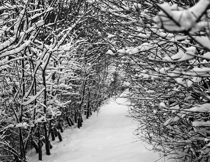Snowy Path, Suffolk 2012