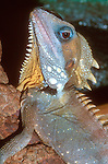 Boyds Rainforest Dragon