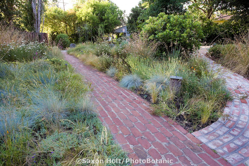 Brick pathways converge in California native plant front yard entry garden, lawn substitute meadow garden