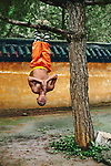 Shaolin Kung Fu Student, Henan Province, China, 2004, final print_milan<br />
