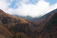 Trees lose their leaves early in Autumn higher in the mountains around Nagano City, Japan.