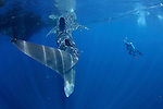 Whalesharks Private
