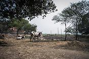 An overview of village Medawar Kalan in Ballia district of Uttar Pradesh, India. Photo: Sanjit Das/Panos for Der Spiegel