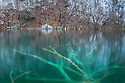 Dead tree visible through clear lake water, Plitvice Lakes National Park, Croatia. January.