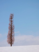 A bare tree in the snow in Niseko, Hokkaid?, Japan