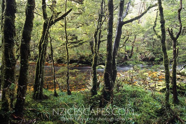 A Saxon River near Saxon Hut on the Heaphy Track - Kahurangi National Park