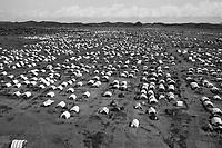 Zalinguei, West Darfur, August 10, 2004.One of two large IDP camps in Zalinguei.