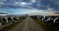 Heads of cows are seen by the side of a road in New Mexico, USA on August  8, 2005..Born in Argentina, photographer Ivan Pisarenko in 2005  decided to ride his motorcycle across the American continent. While traveling Ivan is gathering an exceptional photographic document on the more diverse corners of the region. Archivolatino will publish several stories by this talented young photographer..Closer look at  Ivan's page www.americaendosruedas.com....