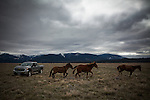 Former Montana Governor Brian Schweitzer's horses trot past his truck on one of his ranches near Ovando, Montana, May 7, 2014.<br /> CREDIT: Max Whittaker/Prime for The Wall Street Journal<br /> BRIAN
