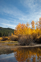 """Aspen Reflections 2"" - Photograph of yellow aspen trees in the fall at a pond near Spooner Lake, Nevada."