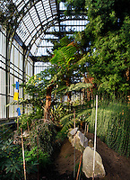 Plant History Glasshouse (formerly Australian Glasshouse), 1830s, Rohault de Fleury, Jardin des Plantes, Museum National d'Histoire Naturelle, Paris, France. Low angle view of cyatheales under the arching glass and metal roof of the glasshouse. In the foreground new plants are staked with Equisetum myriochaetum plants.