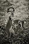 Azafady: Madagascar