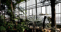 Plant History Glasshouse (formerly Australian Glasshouse), 1830s, Rohault de Fleury, Jardin des Plantes, Museum National d'Histoire Naturelle, Paris, France. Panoramic view of cyatheales plants in the afternoon light, with glass and metal windows in the background.