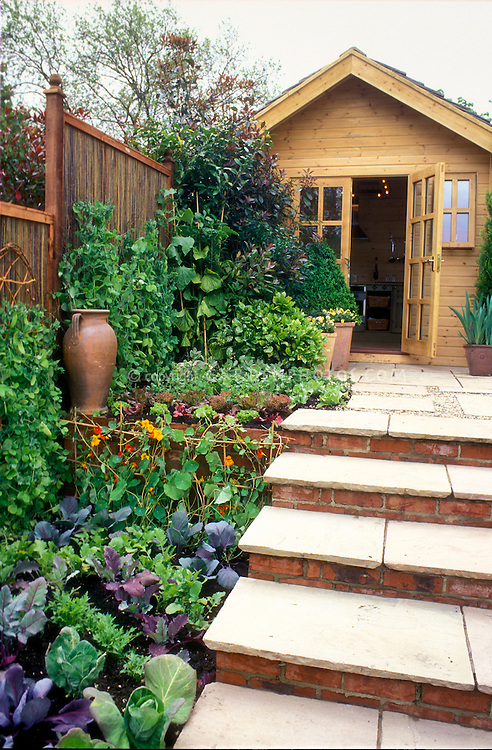 Wooden Shed in the garden with edibles Plant Flower