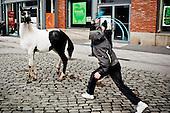 Irlandia-Konie