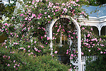 Climbing roses decorate the arbor outside a 1920's era home  near the Ye Kendall Inn in  Boerne, Texas.