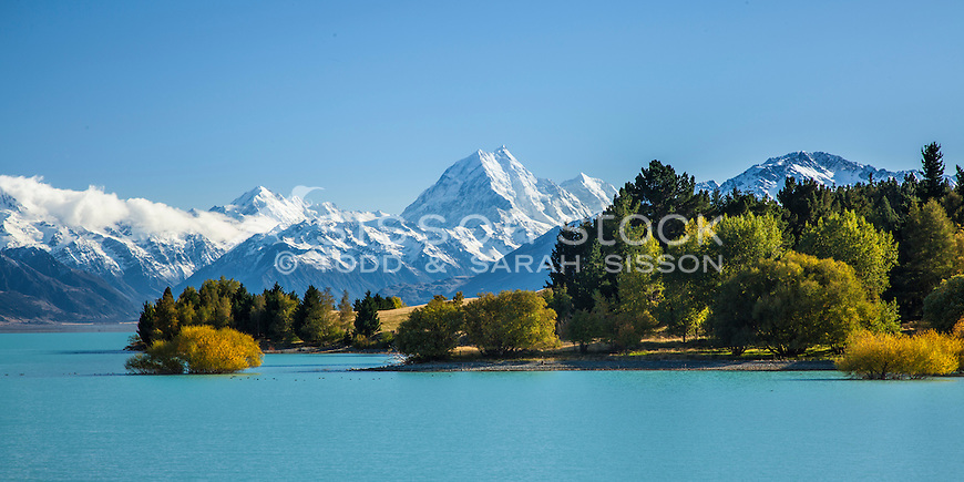 Image of vivid Autumn colours on the shores of Lake Pukaki. Aoraki Mt Cook towering in background. Mackenzie Country, South Canterbury South Island New Zealand. (panorama)