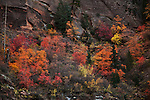 Fall color in Zion National Park in Southwestern Utah.