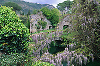 Wisteria covers an ancient bridge over the  Ninfa River in the central Italian garden of Ninfa, south of Rome