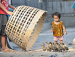 A girl herds ducks in the Cambodian village of Bour.