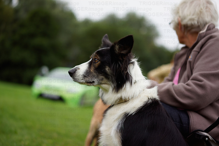 Collie dog with lady owner at a dog show