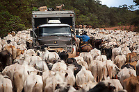 Livestock in Amazon rainforest, herd of cattle at BR-163 road ( Cuiaba - Santarem road ).