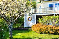 Äppelträd i trädgård med villa hus på Dalarö i Stockholms skärgård.