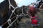 Foto: VidiPhoto<br /> <br /> HEDEL - De bekende paardenmarkt in Hedel in de Bommelerwaard had maandag te maken met een absoluut dieptepunt in de historie. Er werden slechts 1136 paarden en pony's aangevoerd, de helft van wat er normaal gesproken staat. Marktmeester Van den Anker sprak van een &quot;bizar laag aantal.&quot; De oorzaak is volgens hem dat er minder paarden gefokt worden. Gevolg is wel meer handel en iets hogere prijzen. Daarnaast constateerden dierenartsen en controleurs van de Nederlandse Voedsel- en Waren Autoriteit (NVWA) en Eyes on Animals een agressieve sfeer onder de handelaren. Om die reden besloot de organisatie enkele paarden met gecoupeerde staarten niet te verwijderen. De drie grootste paardenmarkten van ons land, Els, Hedel en Zuid-Laren, hebben enkele jaren geleden besloten paarden met afgesneden staarten niet meer toe te laten. Op verzoek van Eyes on Animals en NVWA wilde de marktorganisatie deze paarden maandag in Hedel te verwijderen. Handelaren weigerden echter op te stappen. Om escalatie te voorkomen werd er verder niet ingegrepen.