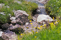 Spring in Alps mountains