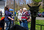Oxford, CT- 23 April 2017-042317CM05-  Jennifer East, left, of Oxford talks about her Huacaya Alpacas with Becky Beardsley, of Southbury and Peggy Dunleavy of Oxford  during a spring fiber fest at the Twitchell-Rowland Homestead in Oxford on Sunday.  The event put on by the Oxford Historical Society featured wool preparation, including shearing, spinning, weaving and felting demonstrations.  The historic house was also open for demonstrations and tours.    Christopher Massa Republican-American
