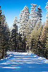 A winter scene on a country road in Montana near Holland Lake in the Seeley Swan Valley