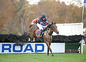 3rd Foxbrook Champion Hurdle Novice Stakes - All The Way Jose